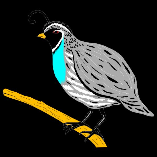 Quail PNG Clip art