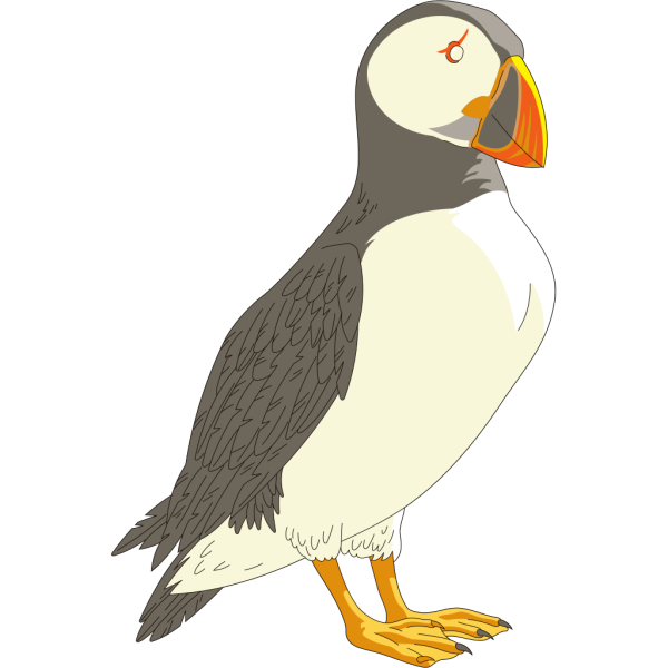 Puffin PNG Clip art