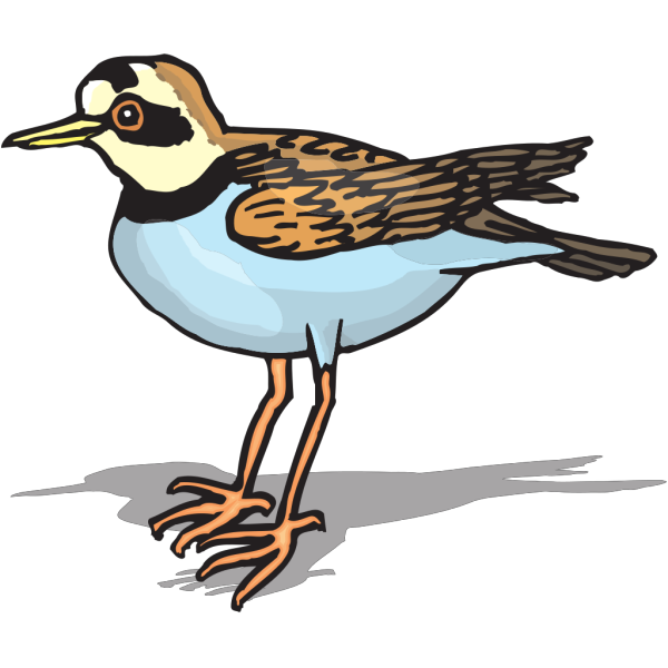 Plover PNG images