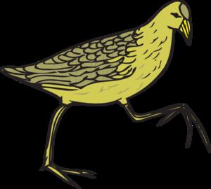 Moorhen PNG Clip art
