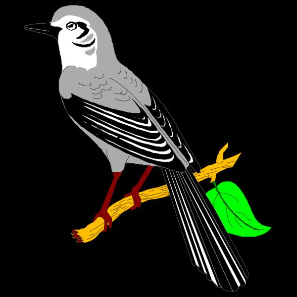 Mockingbird PNG Clip art