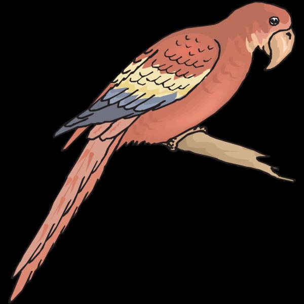 Perched Macaw PNG Clip art