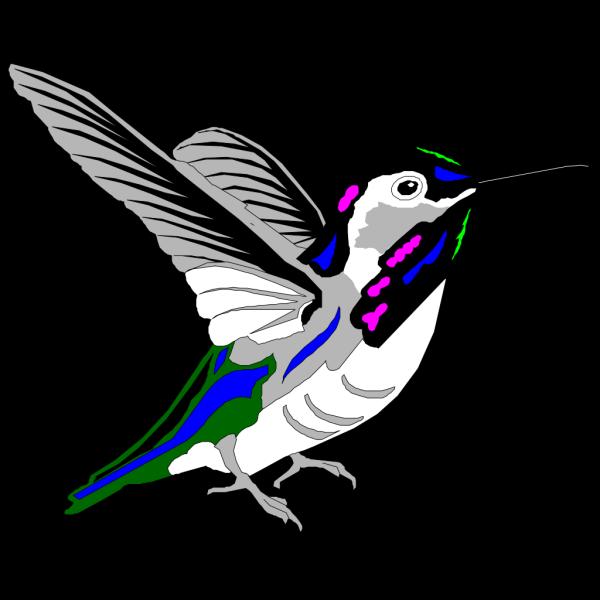Multicolored Hummingbird PNG Clip art