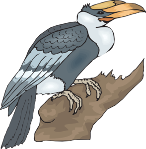 Hornbill On A Branch PNG Clip art