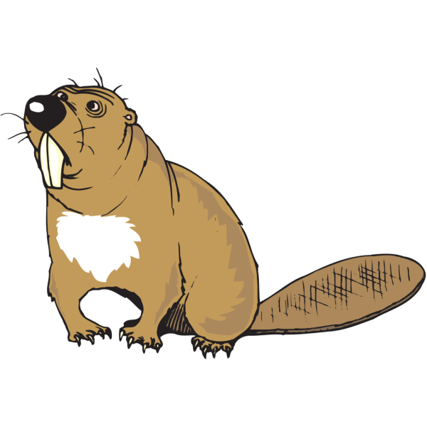 Confused Beaver PNG images