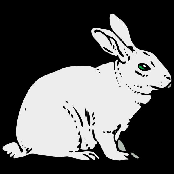 Coniglio PNG Clip art