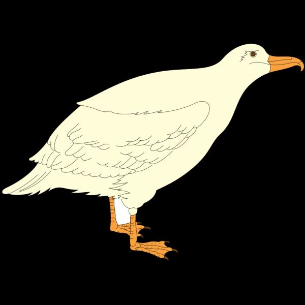 Cartoon Gull PNG Clip art