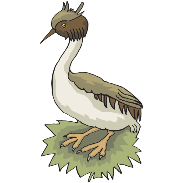 Grebe On Grass PNG images