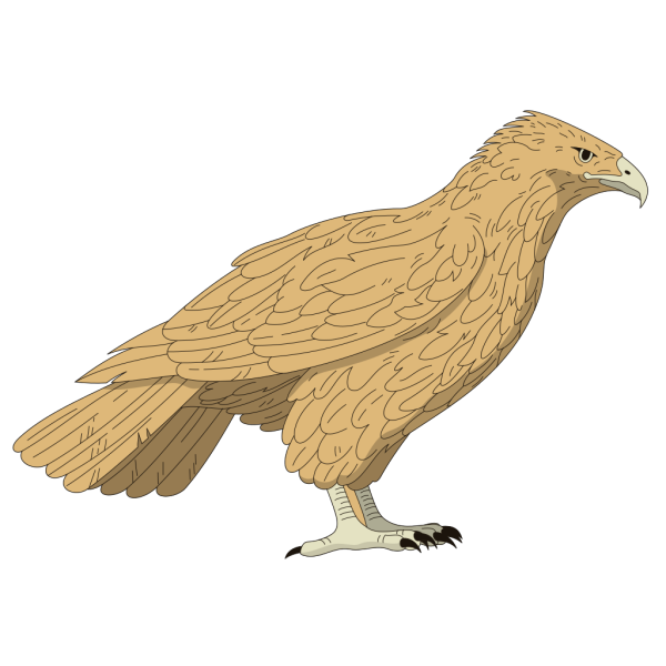 Brown Feathered Falcon PNG Clip art