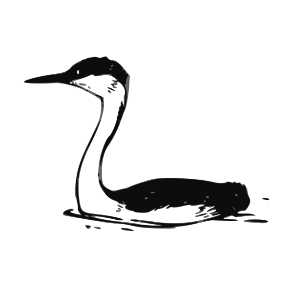 Western Grebe PNG images