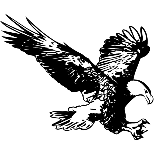 Hunting Eagle Sketch PNG images