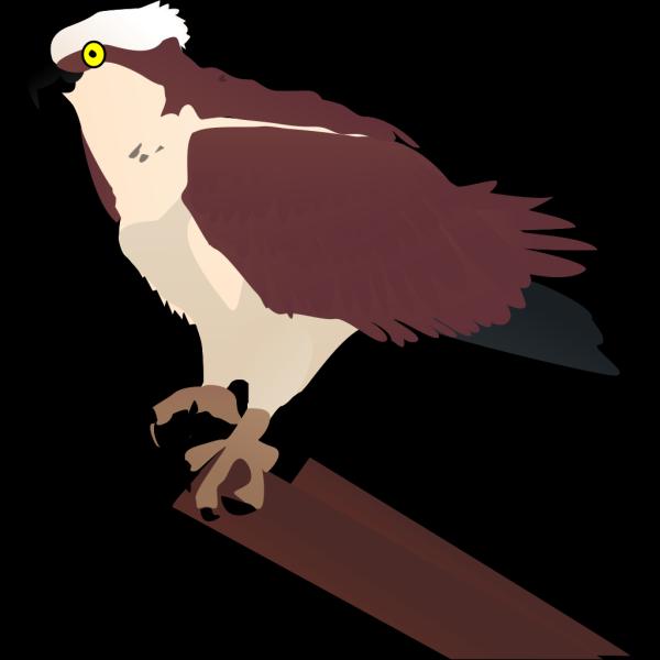 Hawk Perched On Log PNG Clip art