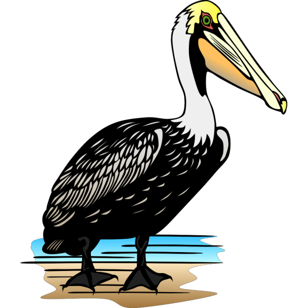 Stading Pelican In Color PNG Clip art