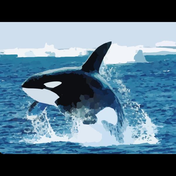 Shamu Killer Whale PNG images