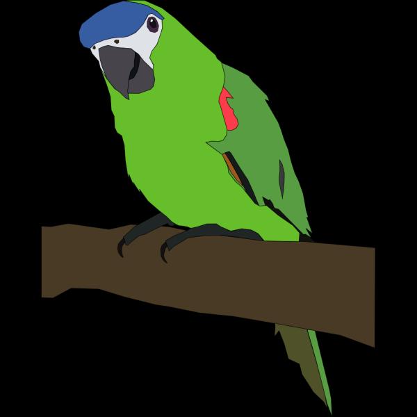 Perched Parrot PNG Clip art