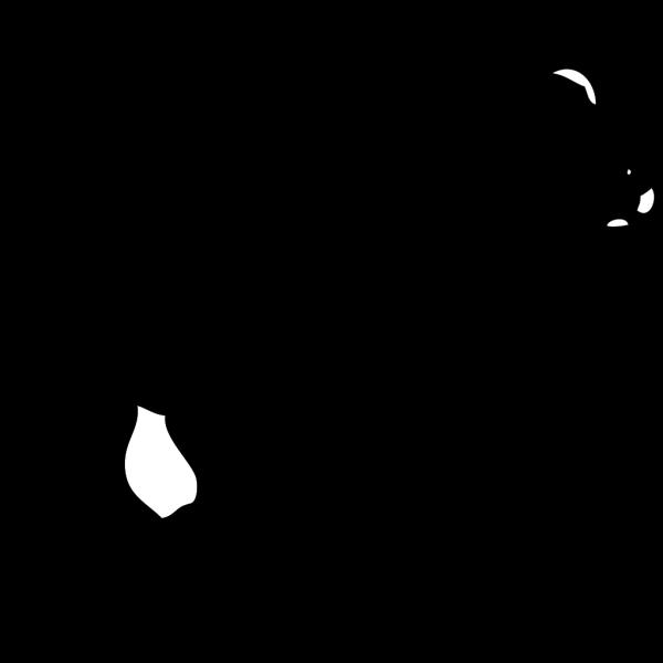Young Polar Bear PNG Clip art