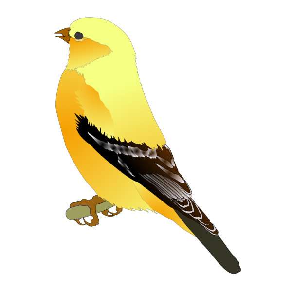 Gold Finch PNG Clip art