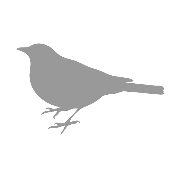 Small Grey Bird PNG images