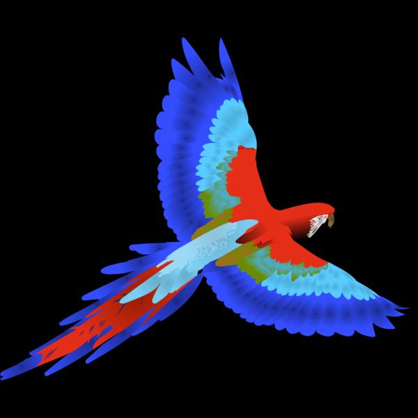Parrot PNG Clip art