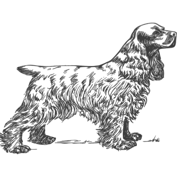 Coker Spaniel Grayscale PNG Clip art