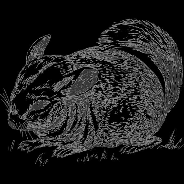 Grayscale Chinchilla PNG Clip art