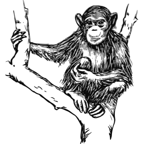 Grayscale Chimpanzee PNG Clip art