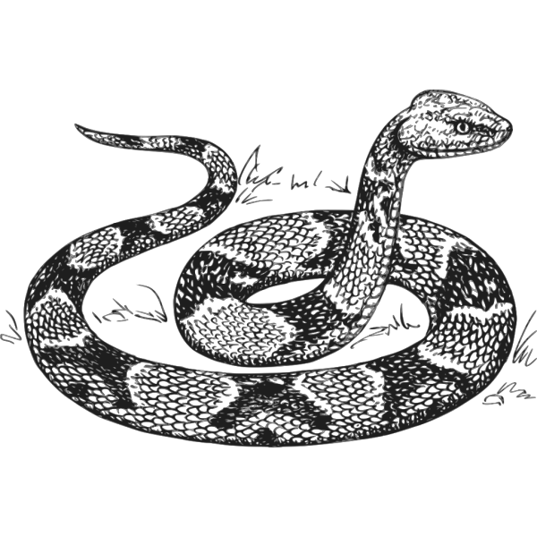 Copperhead Snake PNG images