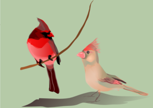Birds In Love PNG Clip art