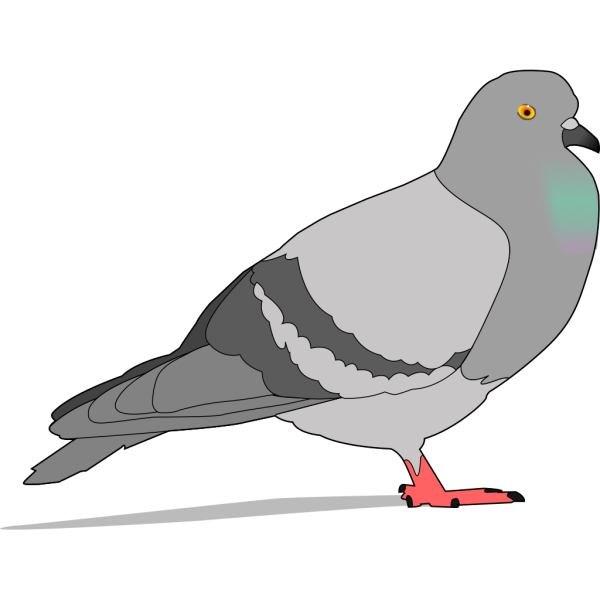 Pigeon With Shadow PNG Clip art