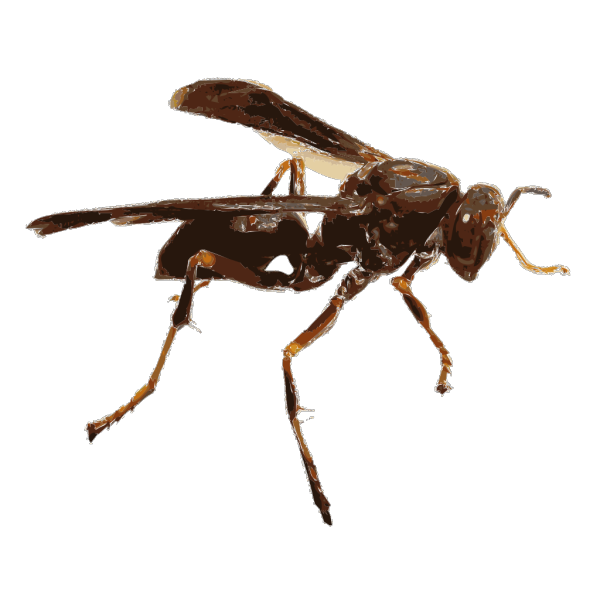Wasp PNG Clip art