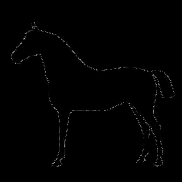 Horse Outline PNG Clip art