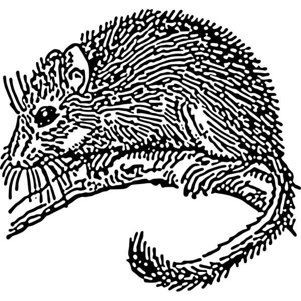 Dormouse Rodent PNG Clip art