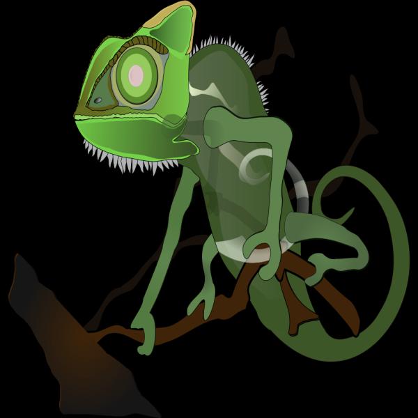 Green Chameleon On Branch PNG images