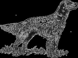 English Setter Dog 2 PNG images