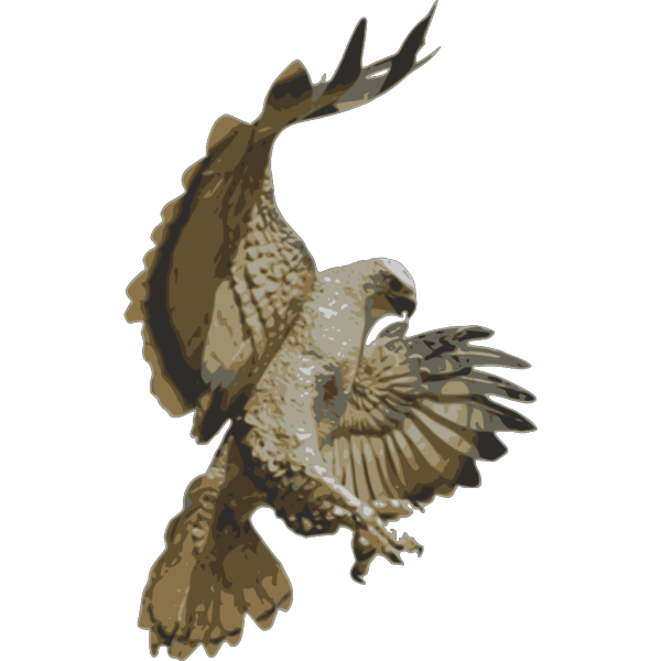 Hawk Attacking PNG Clip art