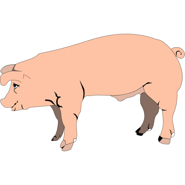 Pig Standing PNG Clip art