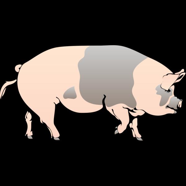 Pig Walking PNG Clip art