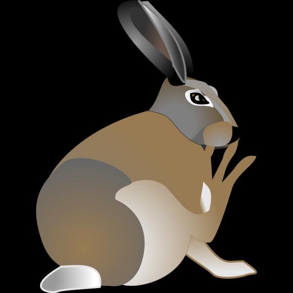 Rabbit Sitting PNG Clip art