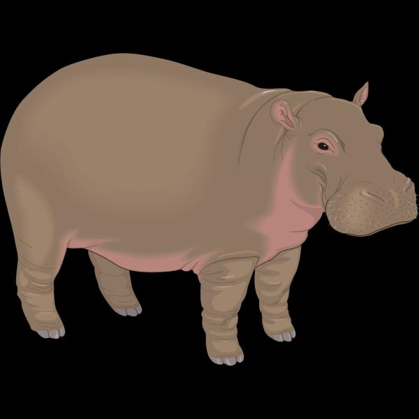 Hippopotamus 3 PNG images