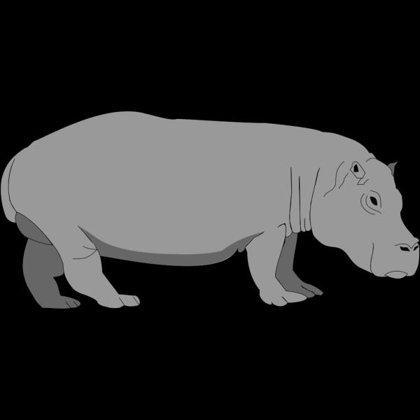 Hippopotamus 4 PNG images