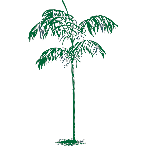 Coconut Palm Tree PNG image
