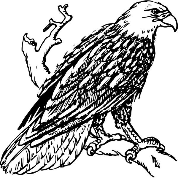 Perched Bald Eagle Outline PNG Clip art