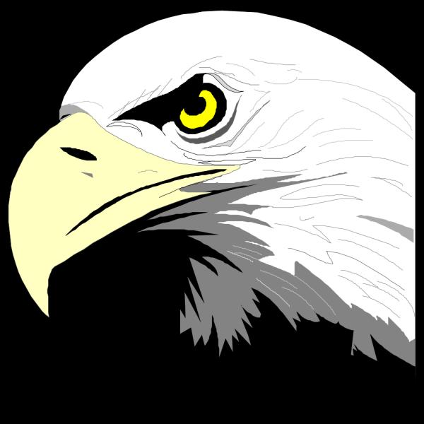 Bald Eagle Head PNG Clip art