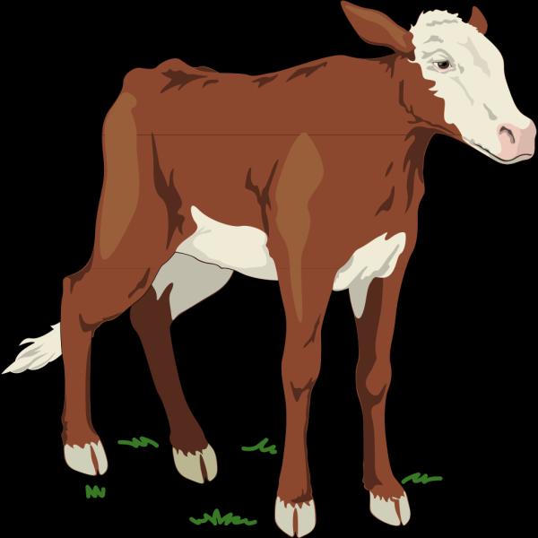 Cow 9 PNG Clip art