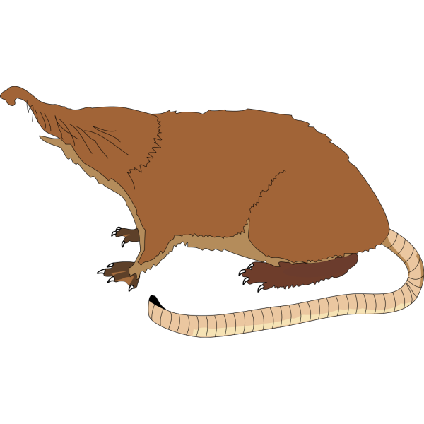 Ant Eater PNG Clip art