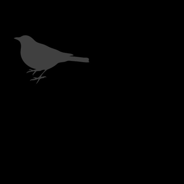 Grey Bird PNG images