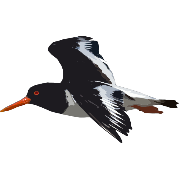 Black Bird Flying PNG Clip art