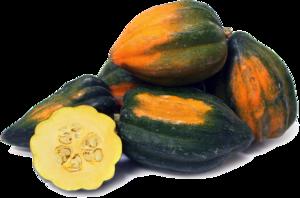 Acorn Squash PNG Image PNG Clip art