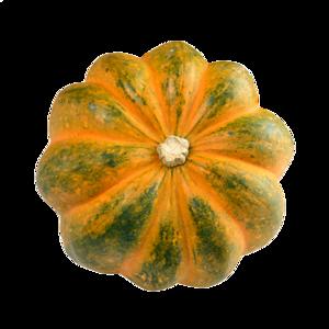 Acorn Squash PNG Transparent Image PNG Clip art