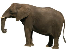 African Elephant PNG Clipart PNG Clip art